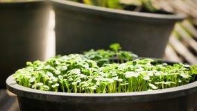 Élevage de plantes vertes Photographie stock