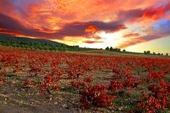 Élevage de raisin Image stock