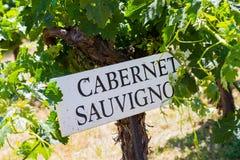 Élevage de raisin de vignoble Photographie stock libre de droits