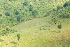 Élevage de terres cultivables et Photos libres de droits