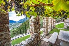 Élevage de vin chez Castello di Avio Trento Photo libre de droits