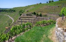 Élevage de vin dans les pentes raides en Allemagne du sud Photo stock