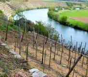 Élevage de vin dans les pentes raides en River Valley Photo stock