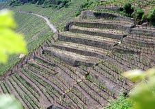 Élevage de vin en terrasse en Allemagne du sud Image stock