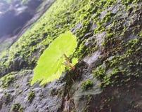 Élevage des roches Photographie stock libre de droits