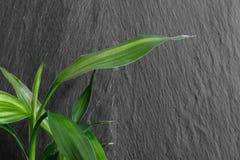 Élevage en bambou à l'arrière-plan noir de roche Photographie stock