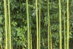 Élevage en bambou Photographie stock