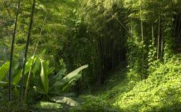 Élevage en bambou dans le jardin botanique à Batumi image stock