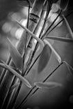 Élevage en bambou de bâtons Photographie stock