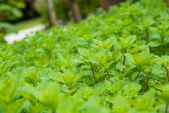 Élevage en bon état d'herbe Photographie stock libre de droits