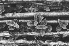 Élevage en bon état sauvage par les bâtons noisette Photographie stock libre de droits