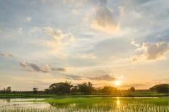 Élevage et coucher du soleil de riz Images stock