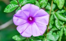 Élevage floral sauvage sur l'île de Lamma Image libre de droits