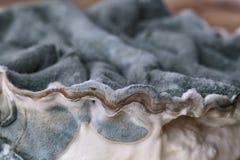 Élevage foncé de Grey Mold Fungus Images libres de droits