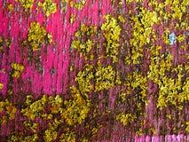 Élevage fongueux de lichen sur le bois Photographie stock