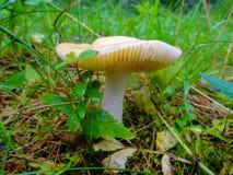 Élevage humide de champignon Image stock