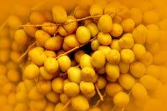 Élevage jaune frais de dates Image libre de droits