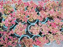 Élevage mis en pot de jeunes plantes Images stock