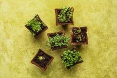 Élevage mis en pot différent de jeunes plantes Image stock