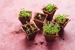 Élevage mis en pot différent de jeunes plantes Photographie stock libre de droits