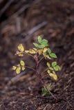 Élevage nouveau-né de jeune plante d'arbre de bébé Photos libres de droits