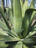 Élevage parmi les cactus de roches Photo libre de droits
