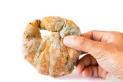 Élevage rapidement sur le pain moisi dans des spores vertes et blanches à disposition Image libre de droits
