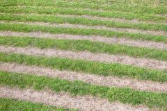 Élevage rayé d'herbe Photographie stock libre de droits