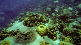 Élevage sous-marin tropical de récif coralien sur la pierre Images stock
