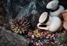 Élevage succulent parmi des roches Photos libres de droits
