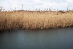 Élevage tubulaire sec près d'un lac en automne Photo stock