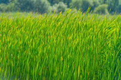 Élevage tubulaire vert le long d'un lac au soleil Images libres de droits