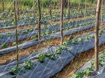 Élevage végétal Image stock