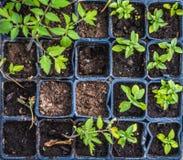 Élevage végétal dans un jardin Images stock