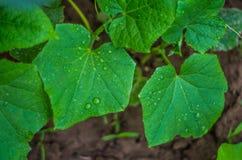 Élevage végétal dans un jardin Photos libres de droits