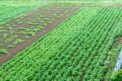 Élevage, vert, culture, jardin, champ, rural Photographie stock libre de droits