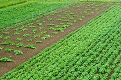 Élevage, vert, culture, jardin, champ, rural Photos libres de droits