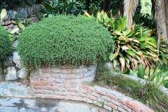 Élevage vert d'herbes Images stock