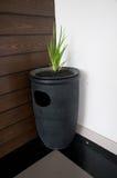 Élevage vert dans le pot pour la décoration Photographie stock
