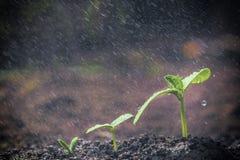 Élevage vert de plantes Image stock