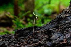Élevage vert de pousse Photo stock