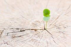 Élevage vert de pousse Photos stock
