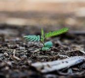 Élevage vert de pousse Photo libre de droits