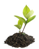 Élevage vert de pousse Image stock