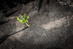 Élevage vert de pousse Photographie stock libre de droits
