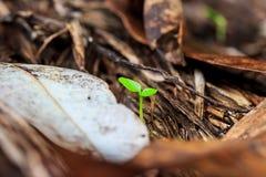 Élevage vert de pousse Photographie stock