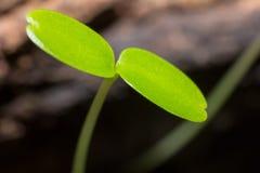 Élevage vert de pousse Images stock