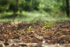 Élevage vert de pousse d'arbre Images stock