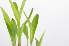 Élevage vert de texture Images stock