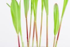 Élevage vert de texture Image libre de droits